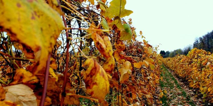 Un otoño muy internacional para los Riberas