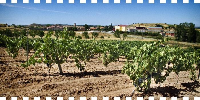Monte Pinadillo Crianza 2011 ...en Suplemento ¡SAL!
