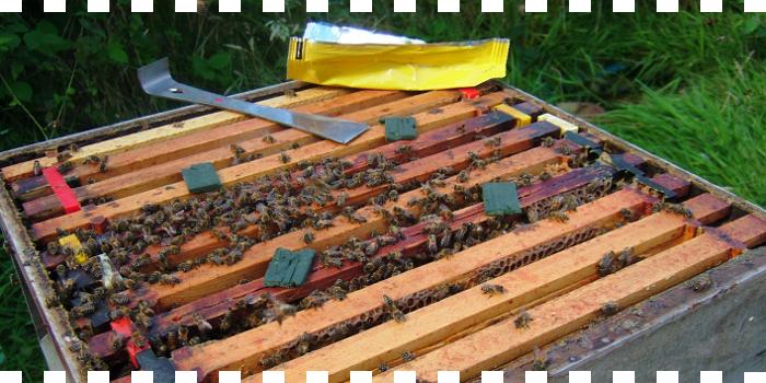 Miel de tomillo decantada ...en Suplemento ¡SAL!